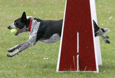 Dog events in the Cotswolds