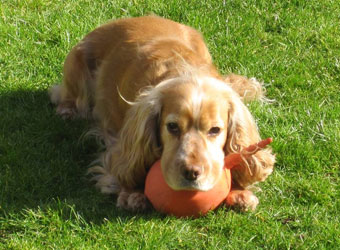 Painswick Dog Training