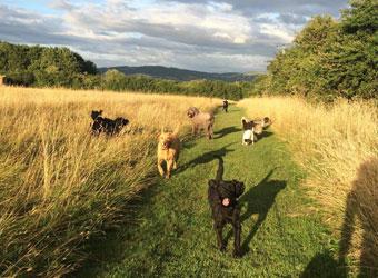 Dog Day Care Westbury On Trym