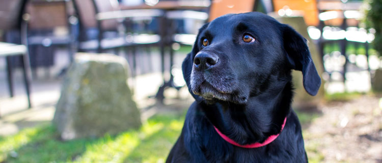 Dog Friendly Restaurants In The Cotswold