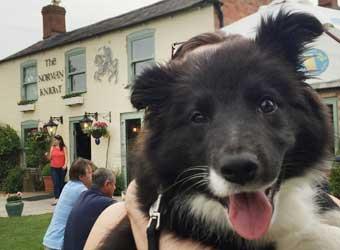 Dog Walks Shipston On Stour